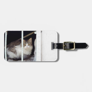 Homeless cat observes street luggage tag