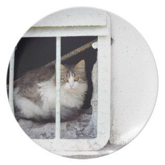 Homeless cat observes street plate