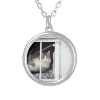 Homeless cat observes street silver plated necklace