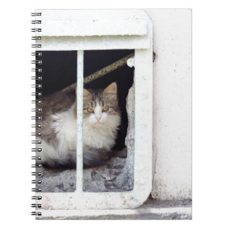 Homeless cat observes street spiral notebook