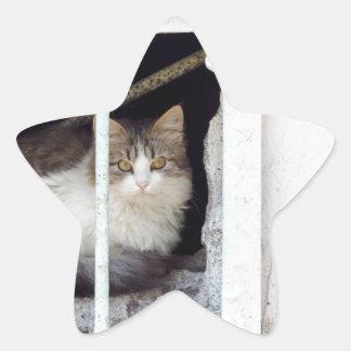 Homeless cat observes street star sticker