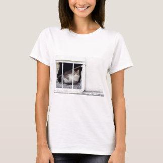 Homeless cat observes street T-Shirt