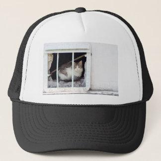 Homeless cat observes street trucker hat