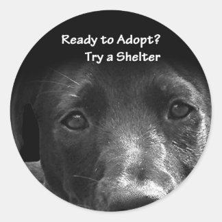 homeless pet adoption stickers dog