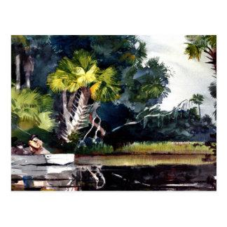 Homer - Homosassa Jungle Postcard