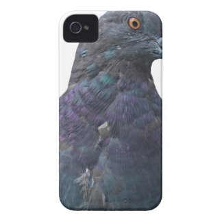 Homing Pigeon iPhone 4 Cases