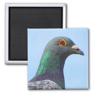 Homing Pigeon Square Magnet