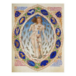 Homme anatomique dans Très Riches Heures de duc Carte Postale