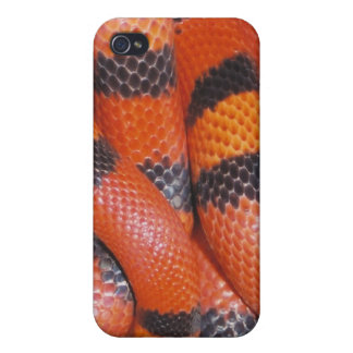 Honduran Milk Snake iPhone 4 Case