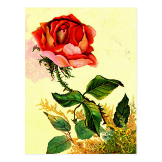 """Honest Rose"" Postcard"