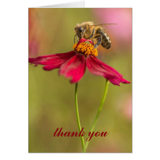 Honey be on a coreopsis flower card