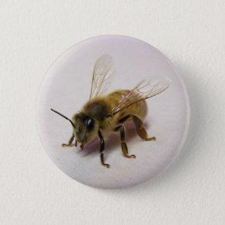 Honey bee 2 inch round button