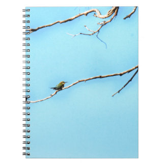 HONEY BEE EATER BIRD QUEENSLAND AUSTRALIA NOTEBOOK