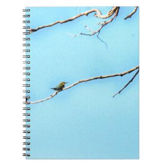 HONEY BEE EATER BIRD QUEENSLAND AUSTRALIA NOTEBOOKS