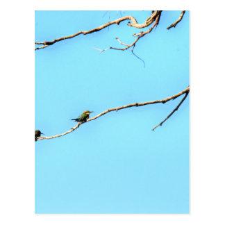 HONEY BEE EATER BIRD QUEENSLAND AUSTRALIA POSTCARD