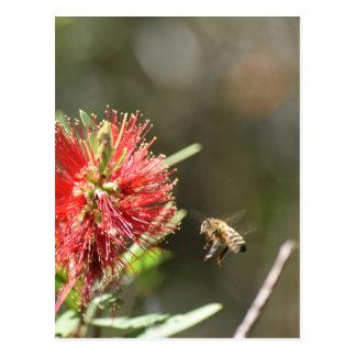 HONEY BEE HOVERING RURAL QUEENSLAND AUSTRALIA POSTCARD