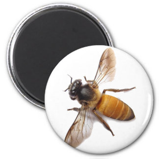 Honey Bee Magnet