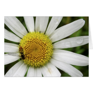 Honey Bee on a Daisy Card