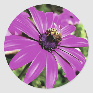 Honey Bee On a Spring Flower Classic Round Sticker