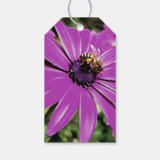 Honey Bee On a Spring Flower Gift Tags