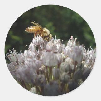 Honey bee on allium - Sticker