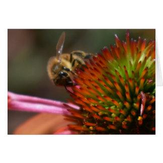 Honey Bee on Coneflower Greeting Card