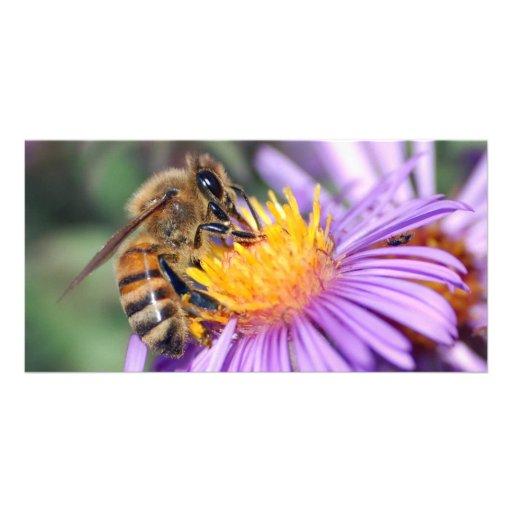 Honey Bee on Purple Pink Flower Photo Cards