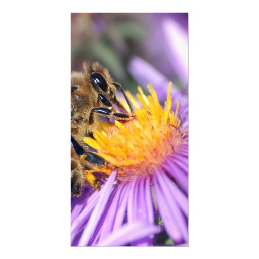 Honey Bee on Purple Pink Flower Picture Card