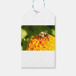 Honey Bee  Orange Yellow Flower With Pollen Sacs Gift Tags
