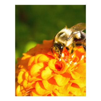 Honey Bee  Orange Yellow Flower With Pollen Sacs Letterhead