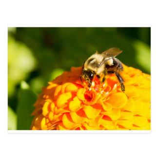 Honey Bee  Orange Yellow Flower With Pollen Sacs Postcard