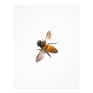 Honey Bee Personalized Letterhead