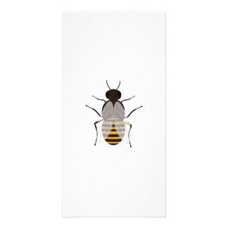 Honey bee photo cards
