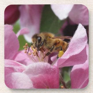 Honey Bee Polinating Pink Crabapple Flower Coasters