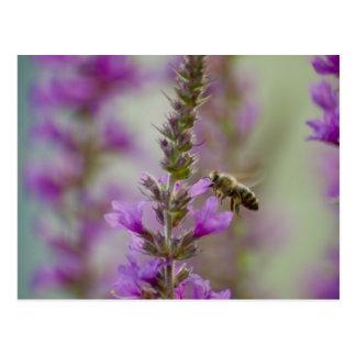 Honey bee postcard