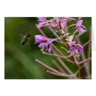 Honey bee visiting flower greetings card