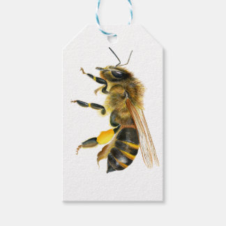 Honey Bee Watercolour Painting Artwork Print Pack Of Gift Tags