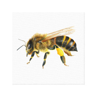 Honey Bee Watercolour Painting Print Artwork