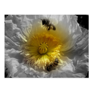 Honey bees and White Poppy Postcard