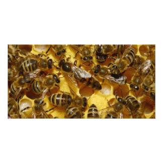 Honey Bees in Hive with Queen in Middle Custom Photo Card