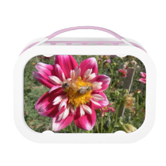Honey Bees on Dahlia Flowers Lunch Box
