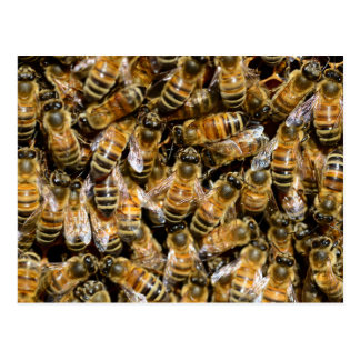 Honey bees postcard