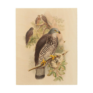 Honey-Buzzard John Gould Birds of Great Britain Wood Canvas