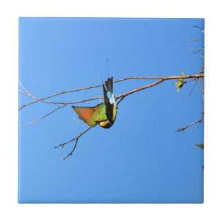 HONEY EATER RURAL QUEENSLAND AUSTRALIA TILE