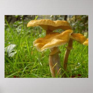 Honey Fungus Poster