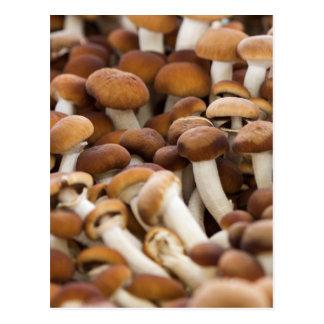 honey mushrooms postcard