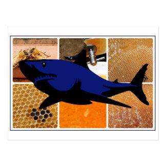 Honey Shark Postcard