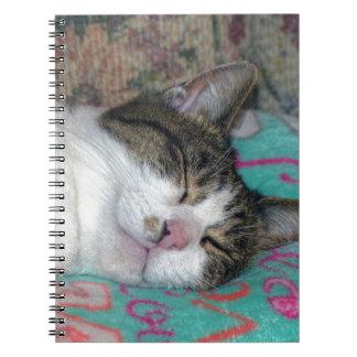 Honey Sleeping Notebooks