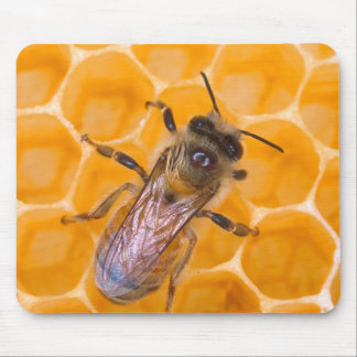Honeybee as Art Mouse Pad