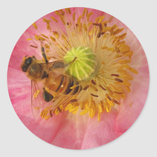 Honeybee in the Poppy Classic Round Sticker